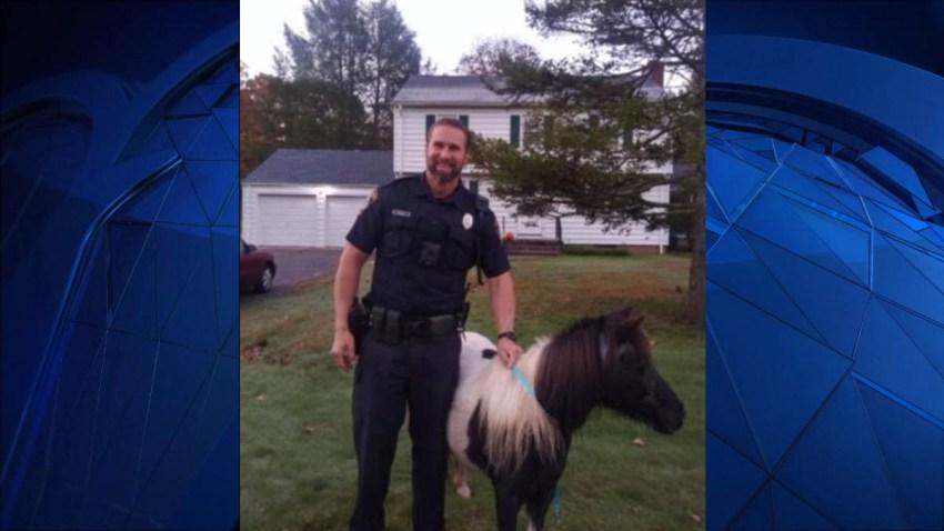 north haven police rescue horse 102019