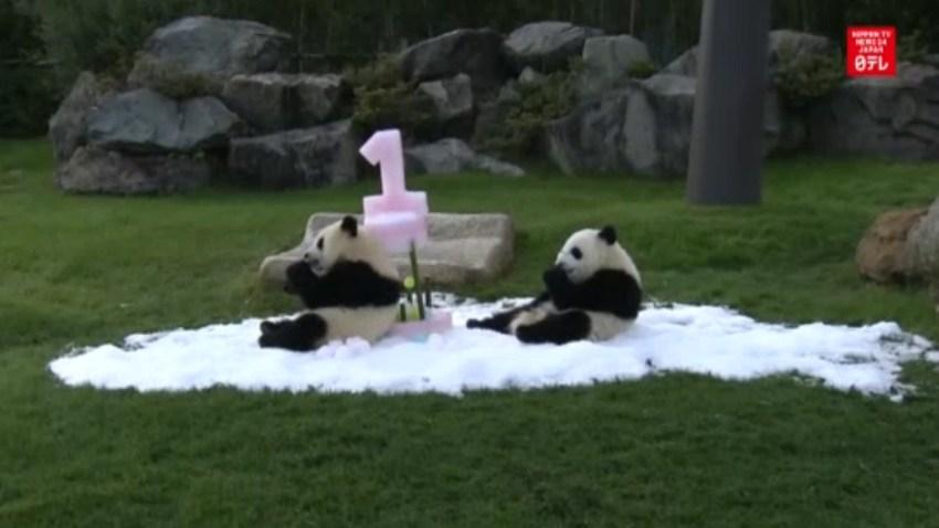 pandas GOOD