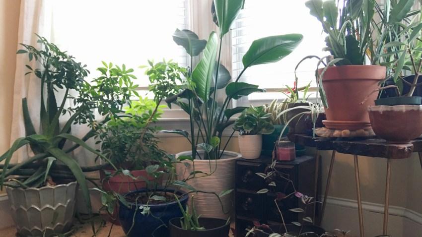 Homes Plant Swaps