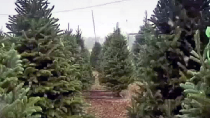produce pete christmas trees