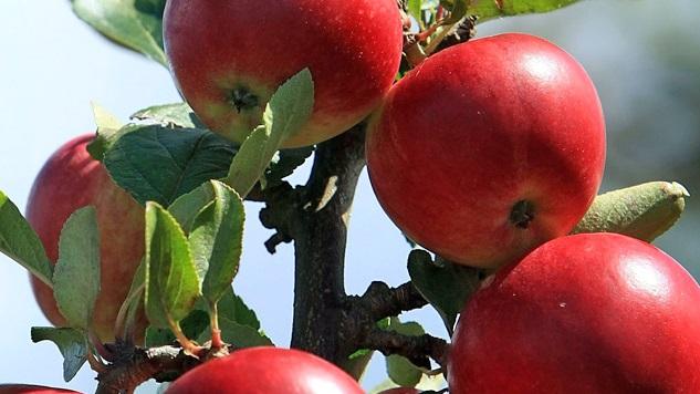 Health Foods Apples