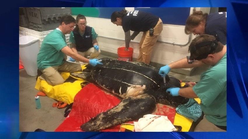 sea turtle death FINISHED