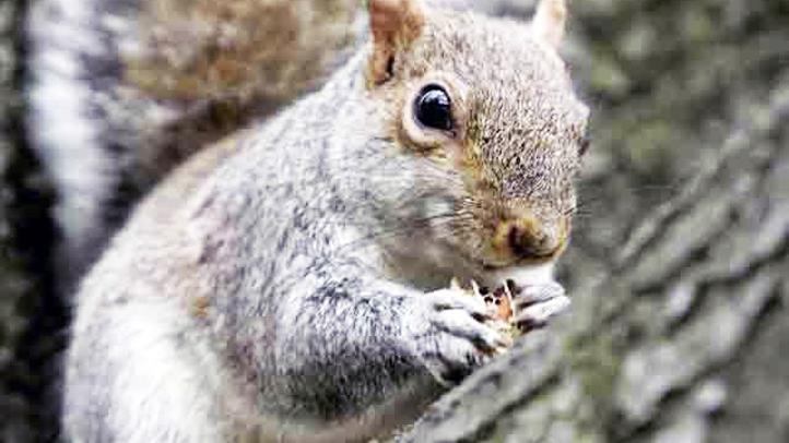 squirrel generic 1