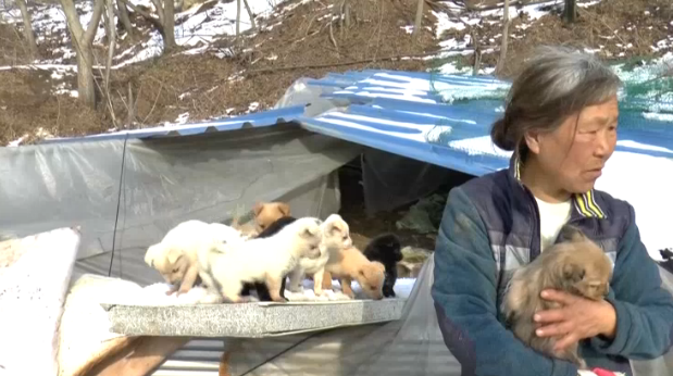 woman saves puppies