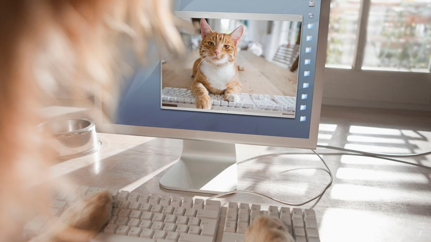 Cat and dog making an Internet video phone call