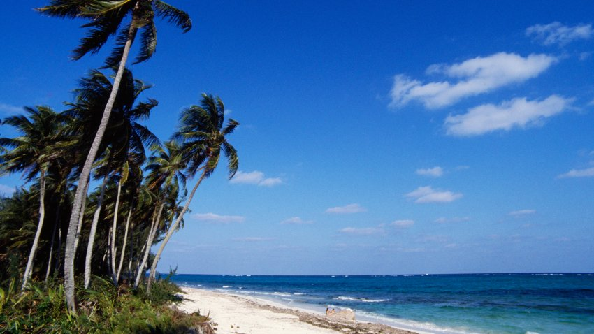 Beach with palm trees, New Providence, The Bahamas