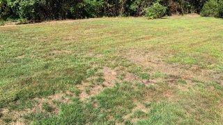 Dry New England Grass File