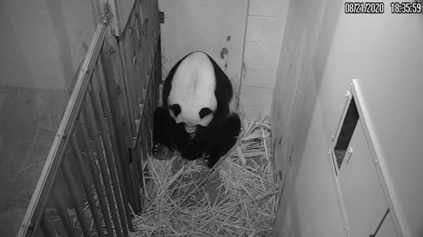 Giant panda Mei Xiang has given birth to a cub.