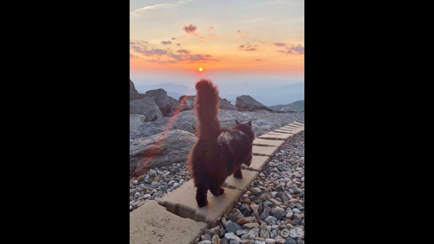 Marty the Mount Washington Observatory Cat