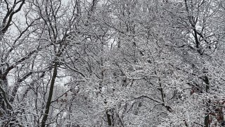 Snow-covered trees in kane county