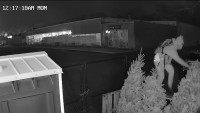 Man Wanted for Stealing Trees and Wreaths From Store