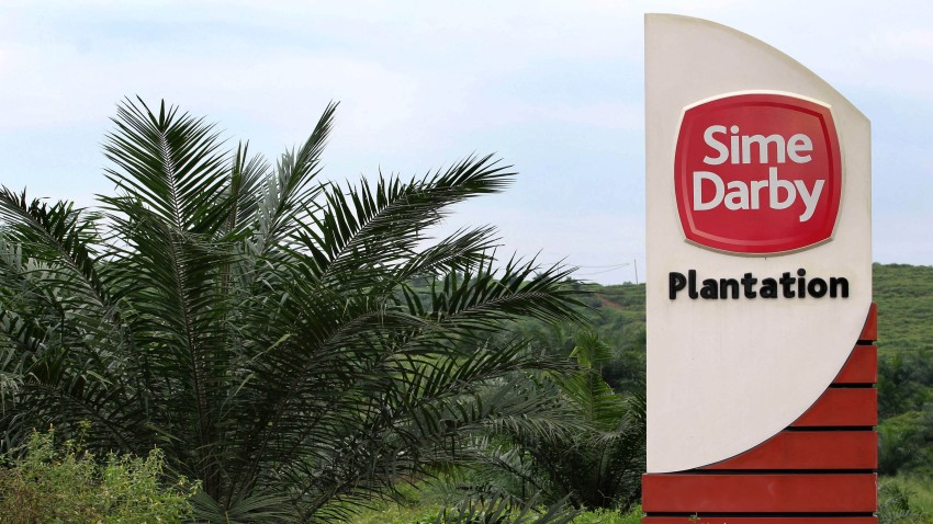 A Sime Darby Bhd. oil palm plantation with sign on the right