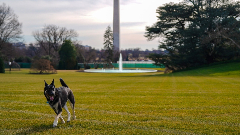 First Dogs Champ and Major Biden Officially Move Into White House