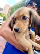 4_puppy