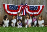 Love Your Country, Love Your Dog: Keep Pets Safe Over July 4