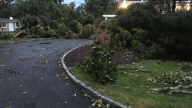 NEW-CANAAN-TREES-DOWN