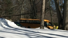 School Bus Driver Dead After Tree Falls on Bus