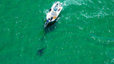 See Every Great White Shark Sighting Near Cape Cod This Summer