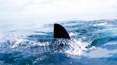 Harbormaster: Possible Shark Sighting at Mass. Beach