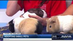 Adopting Small Pets: Little Critters Are Great Additions!