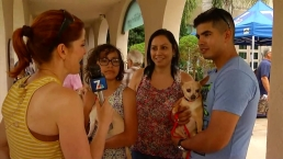 Family Set to Adopt One Dog, Leaves With Two