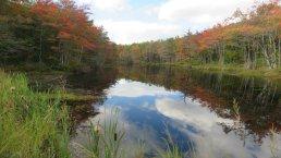 Fall Foliage Around New England