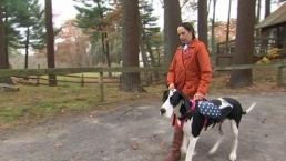 Mass. Rotary Clubs Give Service Dog to Injured Veteran