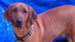 Grieving Boy Seeks Lost Dog