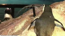 New England Aquarium Making Splash With New Exhibit
