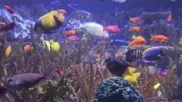 Preserving Ocean Life