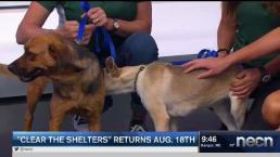 Schultz's Guest House Rescue Stops By