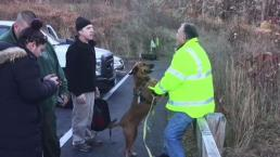 Service Dog Reunited With Owner in Woburn