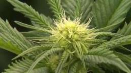 The Take: Recreational Marijuana Sales Begin Tuesday
