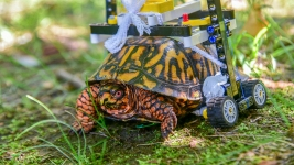 Injured Turtle Gets Lego Wheelchair at Maryland Zoo