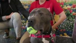Clear the Shelters: Animal Rescue League Boston