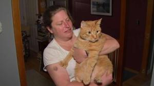 Cat Missing for 7 Years Reunited With His Owner on Cape Cod