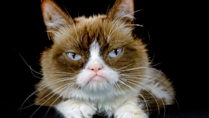 Grumpy Cat, Who Brought Joy to Millions, Dies at Age 7