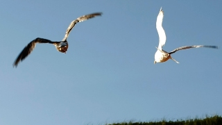 Man Sues Neighbor Over Seagull Droppings