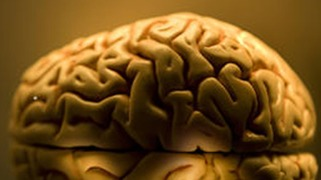 University of Texas Says Missing Brains Were Destroyed