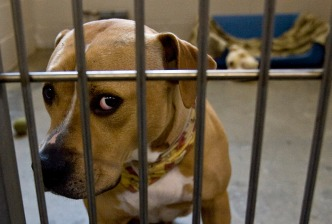 Owner of Pit Bulls That Got Loose, Attacked 3 Pleads Guilty