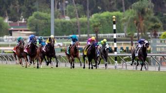 32nd Horse Dies at Santa Anita After Catastrophic Injury