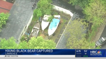 Lawrence Bear Found and Captured