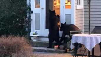 Group Saves Bears From Euthanasia in NH