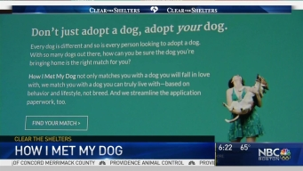 Website Matches Dogs With Adopters