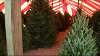 Vt. Christmas Tree Growers Weigh in on Local Supply
