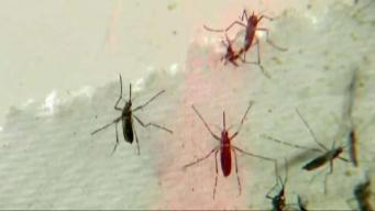 NH Mosquitoes Test Positive for Eastern Equine Encephalitis