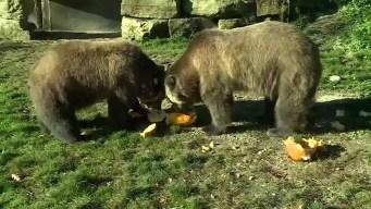 Bears Predict World Series Winner
