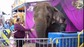 Beloved Elephant at Big E Has Died at Age 54