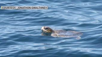 Boaters Encouraged to Report Sea Turtle Sightings