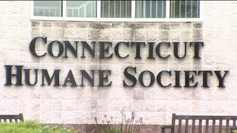 Connecticut Humane Society Helps Pets in Disaster Areas